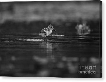 Canvas Print featuring the photograph   First Steps by John F Tsumas