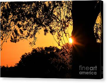 First Sunrise Of A New Year Canvas Print by Toma Caul