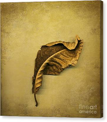 First To Fall Canvas Print by Jan Bickerton