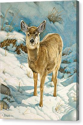 First Winter  - Fawn Canvas Print by Paul Krapf
