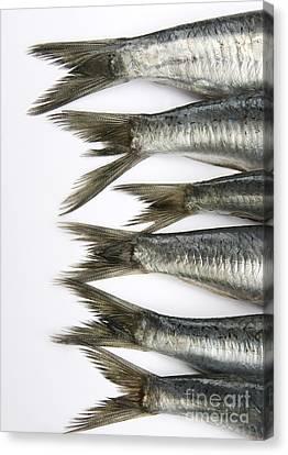 Animal Body Part Canvas Print - Fish by Bernard Jaubert
