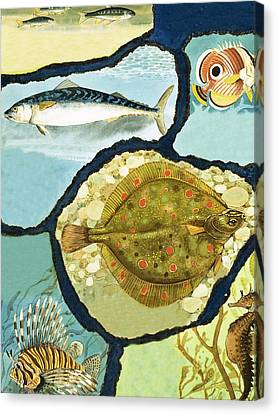 Creature Canvas Print - Fish by English School