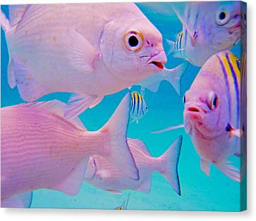Fish Frenzy Canvas Print by Carey Chen