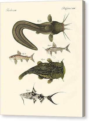 Fish From Bengali Canvas Print by Splendid Art Prints
