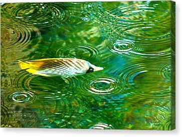 Fish In The Rain Canvas Print