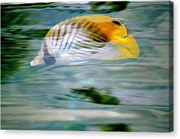 Fish In The Sunlight Canvas Print by Lehua Pekelo-Stearns