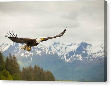 Flying Animals Canvas Print - Fish Is On The Menu by Tim Grams