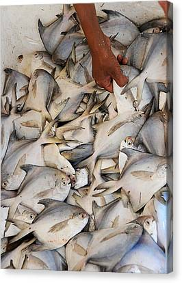 Fish Market Canvas Print by Money Sharma