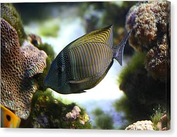 Fish - National Aquarium In Baltimore Md - 1212109 Canvas Print by DC Photographer