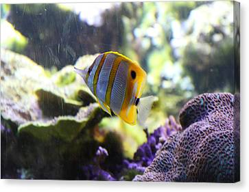 Fish - National Aquarium In Baltimore Md - 1212111 Canvas Print by DC Photographer
