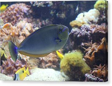 Fish - National Aquarium In Baltimore Md - 1212121 Canvas Print by DC Photographer