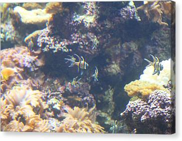 Fish - National Aquarium In Baltimore Md - 1212123 Canvas Print by DC Photographer