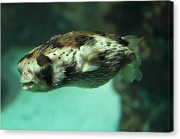 Fish - National Aquarium In Baltimore Md - 1212136 Canvas Print by DC Photographer