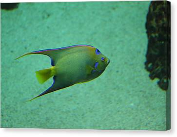 Fish - National Aquarium In Baltimore Md - 1212139 Canvas Print by DC Photographer