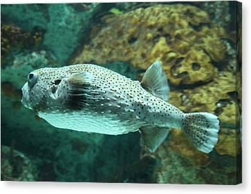Fish - National Aquarium In Baltimore Md - 1212143 Canvas Print by DC Photographer