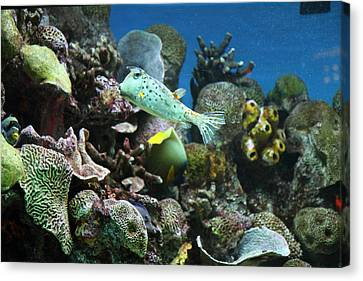 Fish - National Aquarium In Baltimore Md - 121231 Canvas Print by DC Photographer