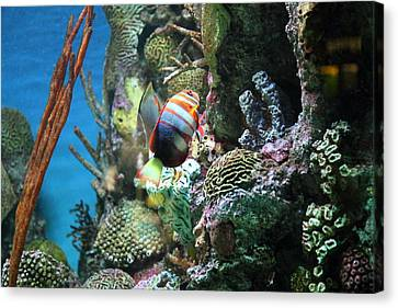 Fish - National Aquarium In Baltimore Md - 121234 Canvas Print by DC Photographer