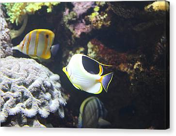 Fish - National Aquarium In Baltimore Md - 121239 Canvas Print by DC Photographer