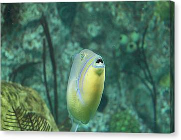 Fish - National Aquarium In Baltimore Md - 121256 Canvas Print by DC Photographer