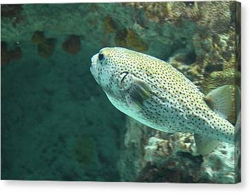 Fish - National Aquarium In Baltimore Md - 121259 Canvas Print by DC Photographer