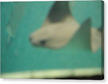 Fish - National Aquarium In Baltimore Md - 121262 Canvas Print by DC Photographer