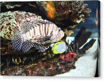Fish - National Aquarium In Baltimore Md - 121274 Canvas Print by DC Photographer