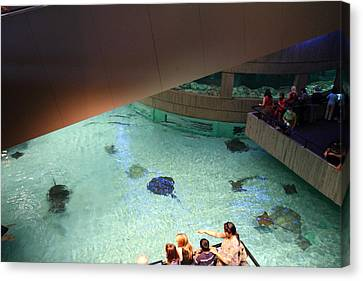 Fish - National Aquarium In Baltimore Md - 121286 Canvas Print by DC Photographer