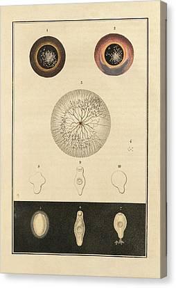 Fish Parasite Canvas Print