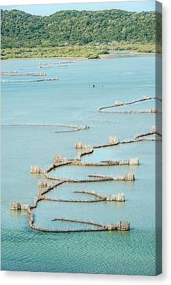 Fish Traps Canvas Print by Peter Chadwick