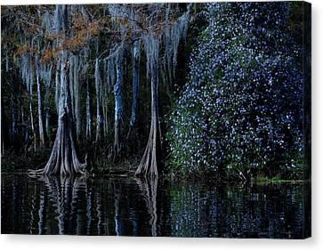 Fisheating Creek 01 Canvas Print by Carol Kay