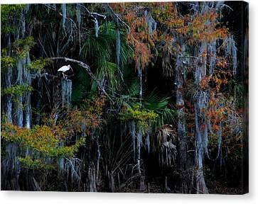Fisheating Creek 05 Canvas Print by Carol Kay