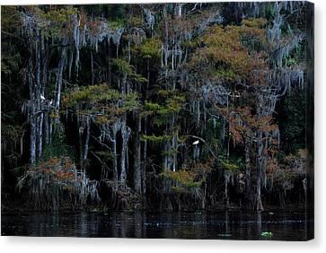 Fisheating Creek 12 Canvas Print by Carol Kay