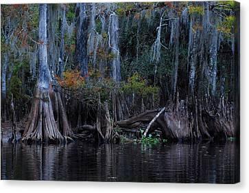 Fisheating Creek 19 Canvas Print by Carol Kay