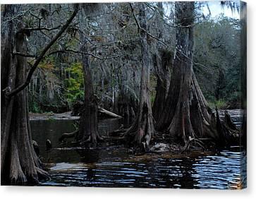 Fisheating Creek 22 Canvas Print by Carol Kay