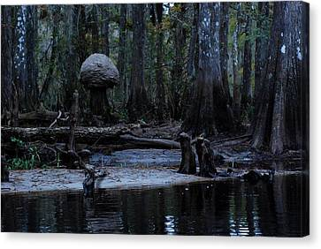 Fisheating Creek 26 Canvas Print by Carol Kay