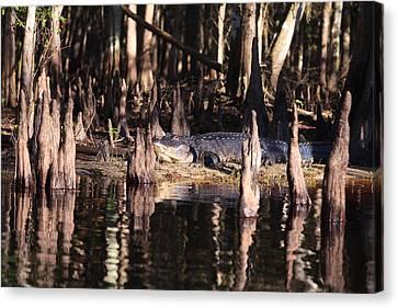 Fisheating Creek Canvas Print by Jonathan Gewirtz