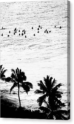 Fisher Palms Canvas Print by Sean Davey