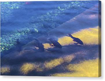 Fishes In Raw Canvas Print by Viktor Savchenko