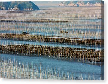 Fishing Boat Sailing Through Bamboo Canvas Print