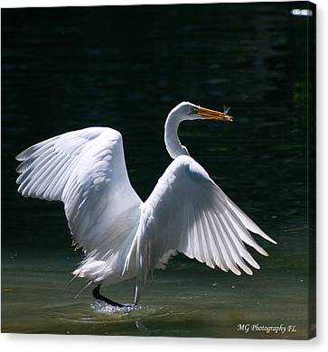 Fishing Egret Canvas Print by Marty Gayler