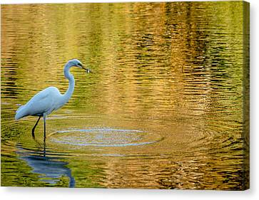 Fishing Canvas Print by Wade Brooks