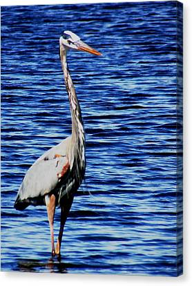 Fishing Canvas Print by Will Boutin Photos