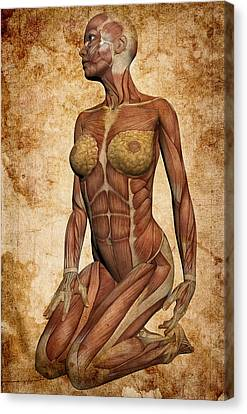Fit Female Revealed Canvas Print by Daniel Hagerman