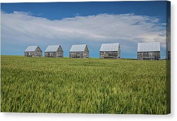 Five Granaries On Wheat Field, Alberta Canvas Print by Panoramic Images
