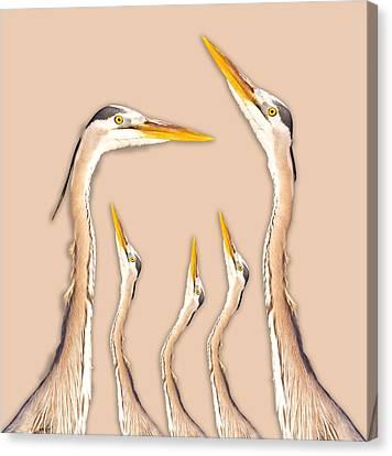 Five Herons Canvas Print by Betsy Knapp