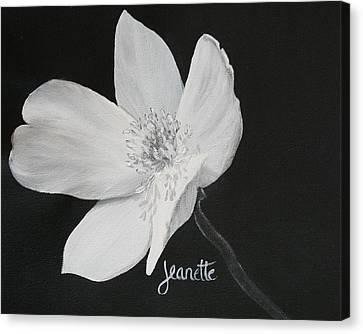 Five Petal Rose Canvas Print
