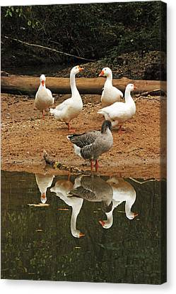 Five Reflections Canvas Print by Ann Hernandez