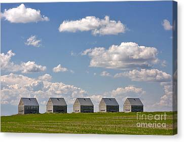 Five Sheds On The Alberta Prairie Canvas Print by Louise Heusinkveld
