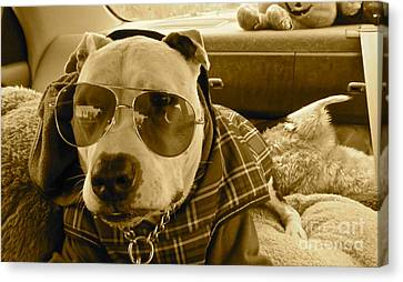 Fix My Sunglasses.... Canvas Print by Q's House of Art ArtandFinePhotography