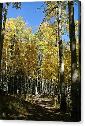 Flagstaff Aspens 802 Canvas Print